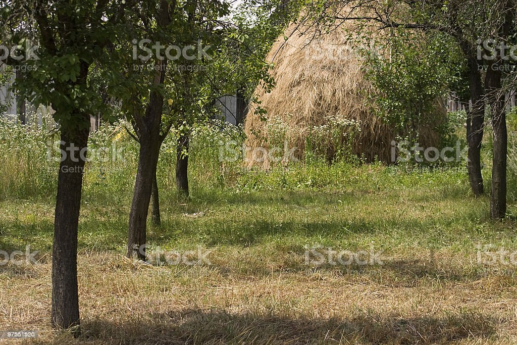 Apple trees and haystack stock photo