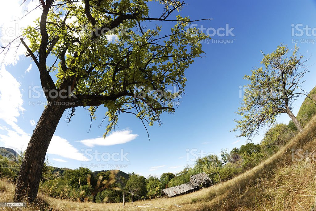 apple trees over blue sky royalty-free stock photo