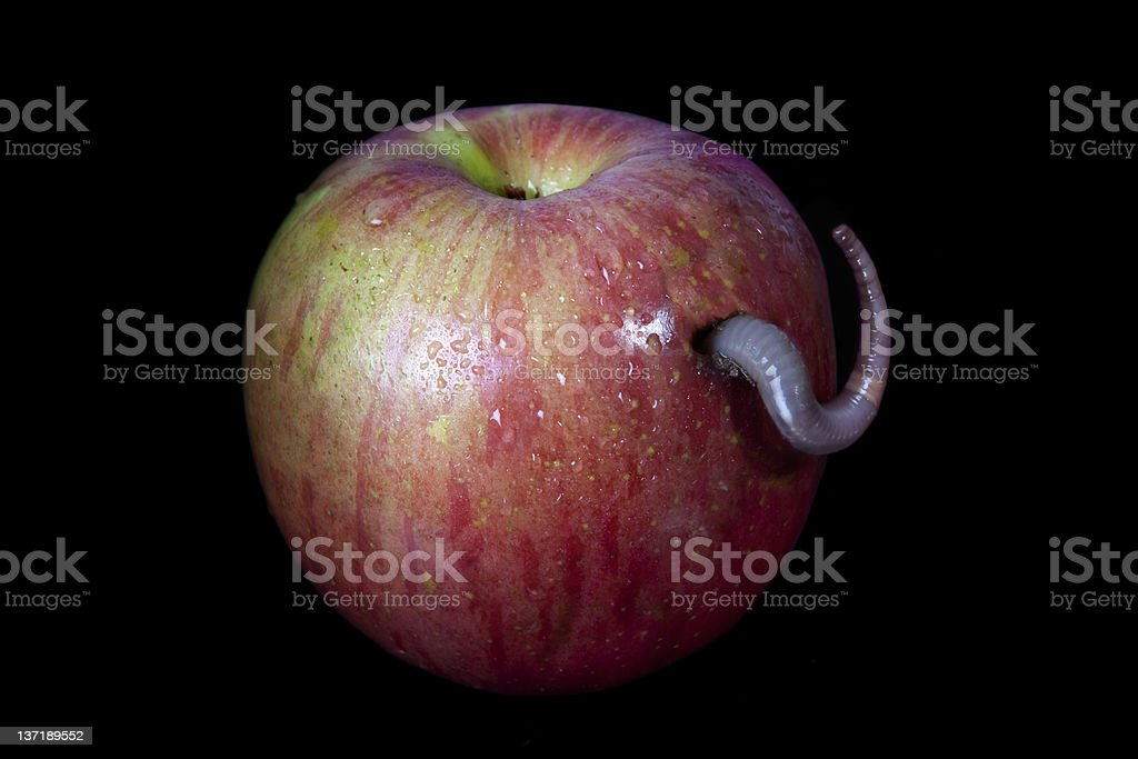 Apple with a worm stock photo