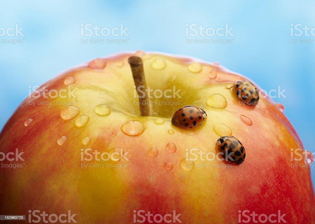 apple with ladybug royalty-free stock photo