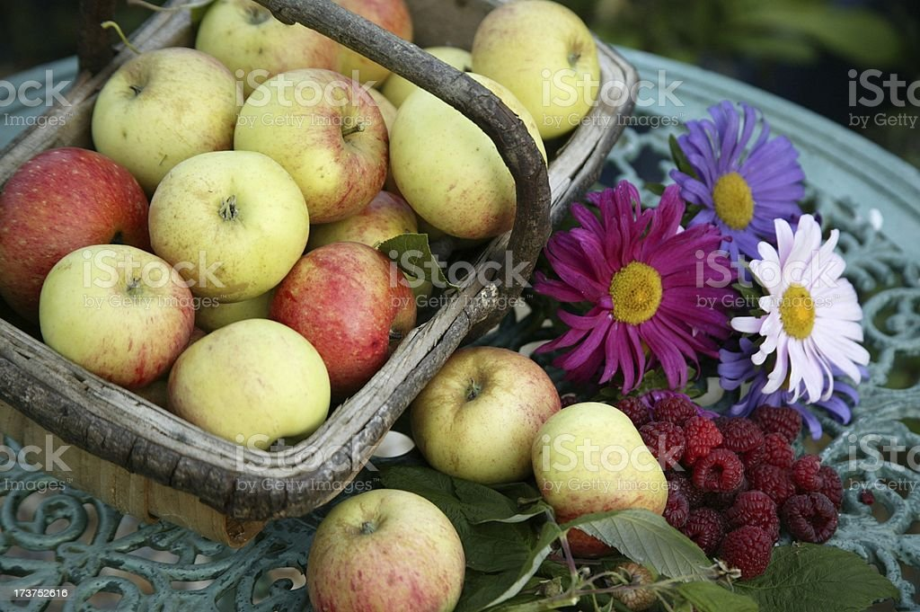 Apples and Asters royalty-free stock photo