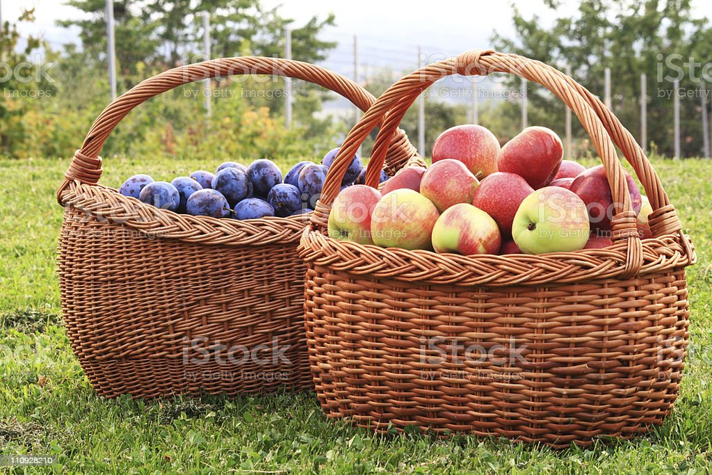 Apples and Plums royalty-free stock photo