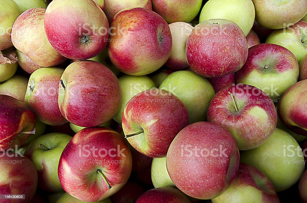 Apples at Harvest royalty-free stock photo