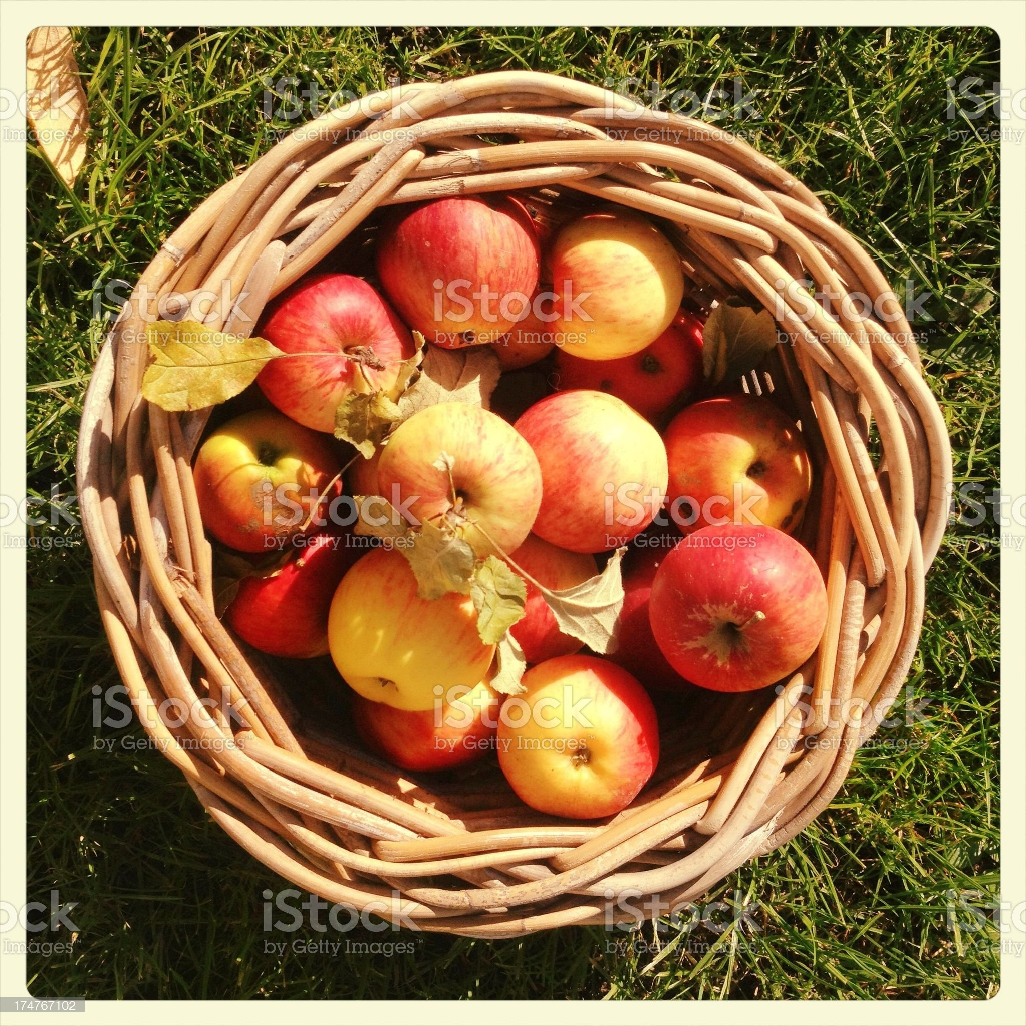apples in a basket royalty-free stock photo