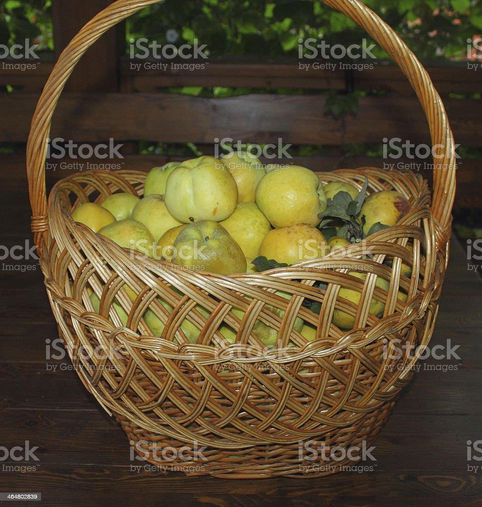 Manzanas en una cesta foto de stock libre de derechos