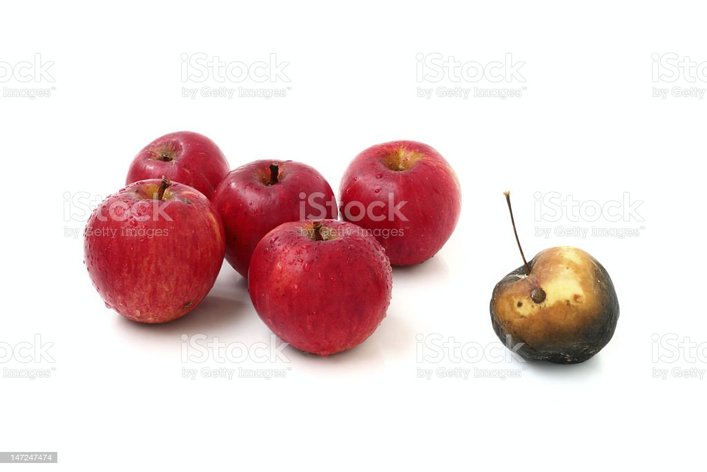 Apples in a group royalty-free stock photo