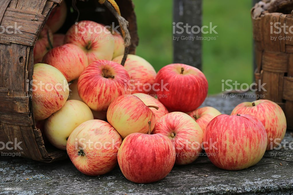 apples in a wicker basket old retro vintage rustic style stock photo