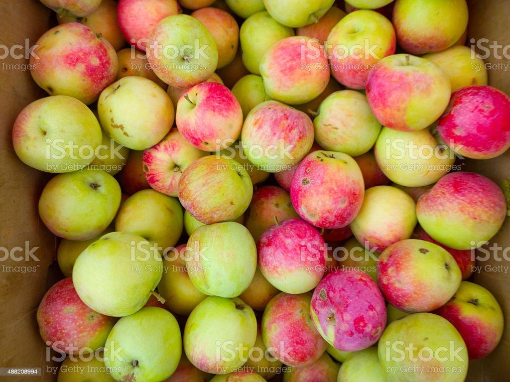 Apples in box. stock photo