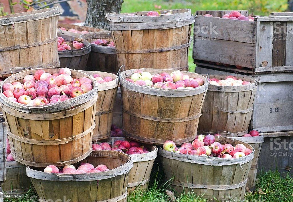 Apples in bushels stock photo