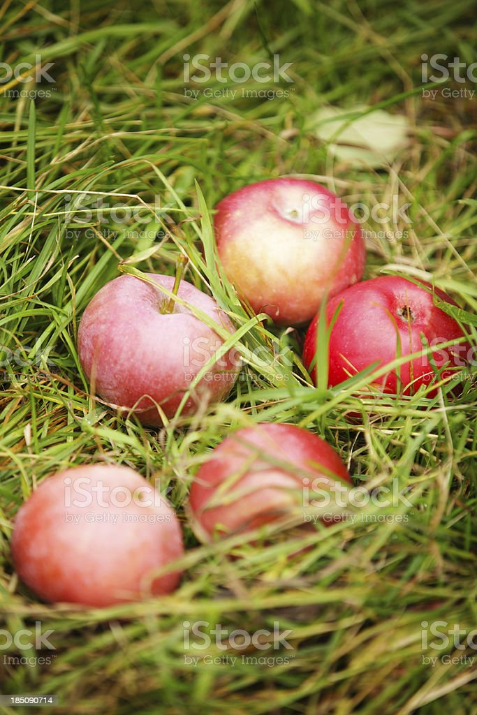 Apples in grass stock photo