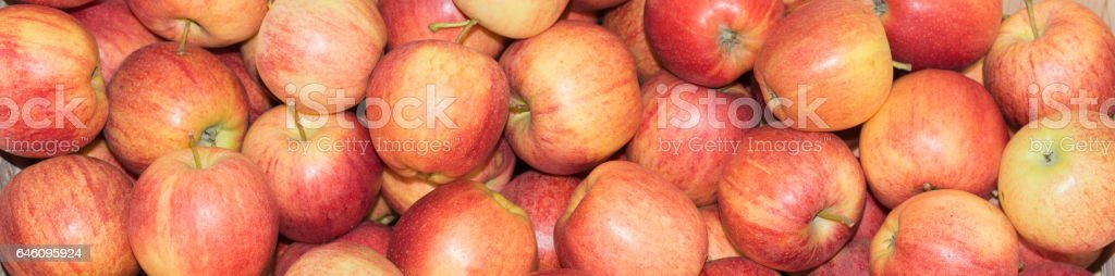 Apples in large quantities scattered stock photo