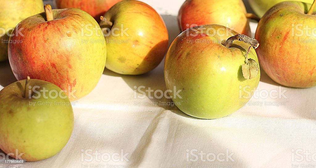 apples in sunlight royalty-free stock photo