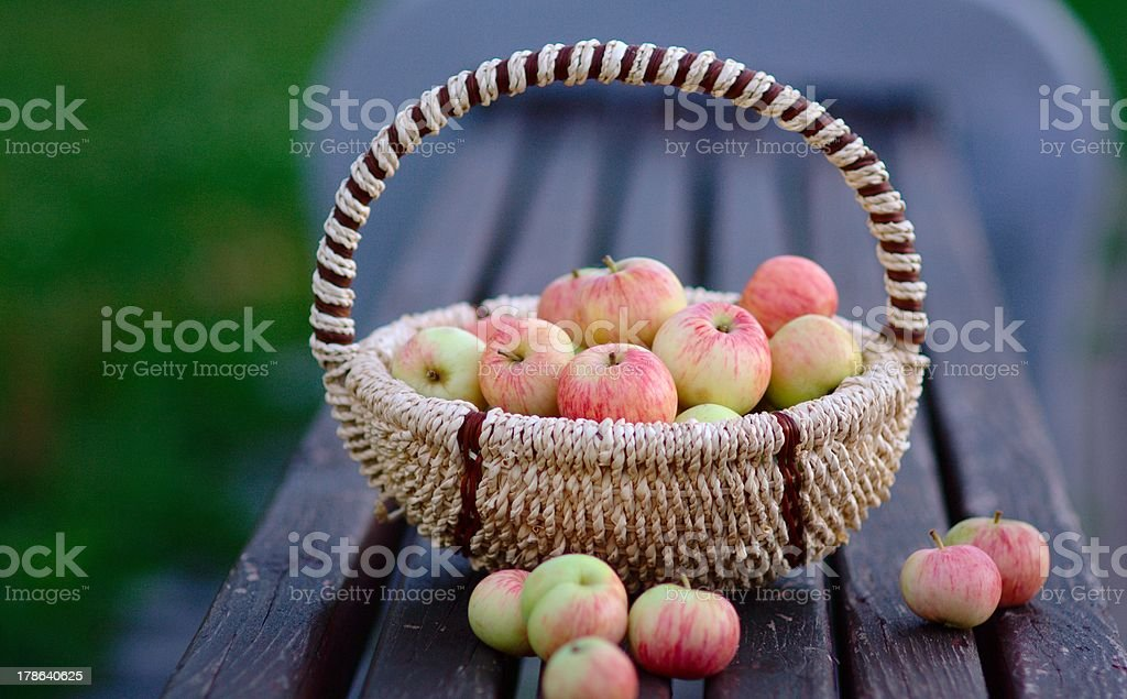 Apples in the Basket stock photo