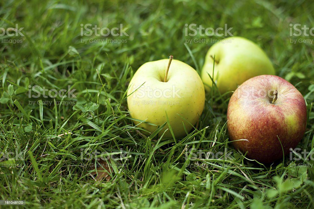 Apples in the Grass royalty-free stock photo