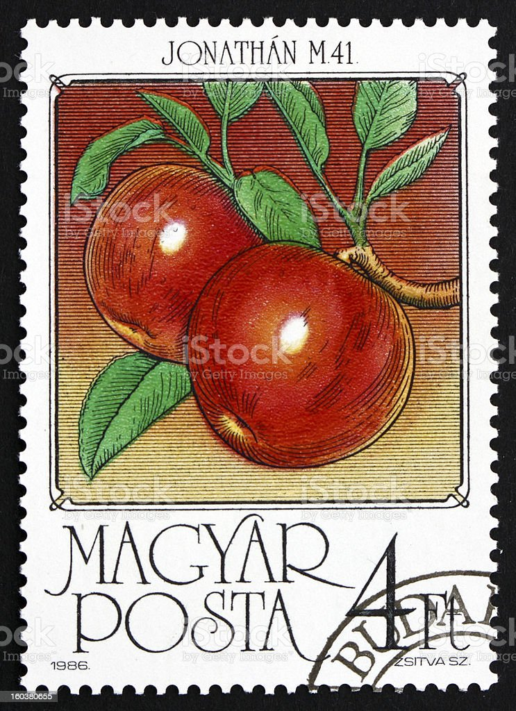 Apples, Malus Domestica, Fruit stock photo