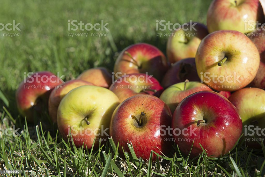 apples on the grass royalty-free stock photo