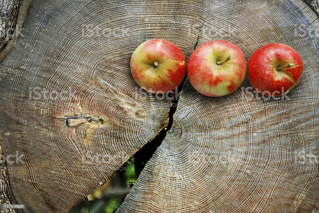Apples on  tree trunk cut royalty-free stock photo