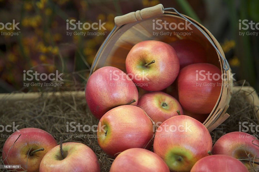 Apples Spilling Out of Basket, Fresh, Food, Fruit, Abundance royalty-free stock photo