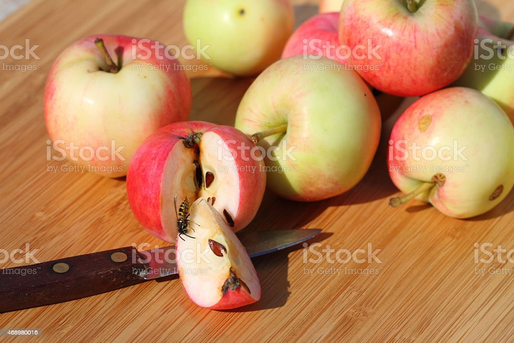 apples, wasp and knife stock photo