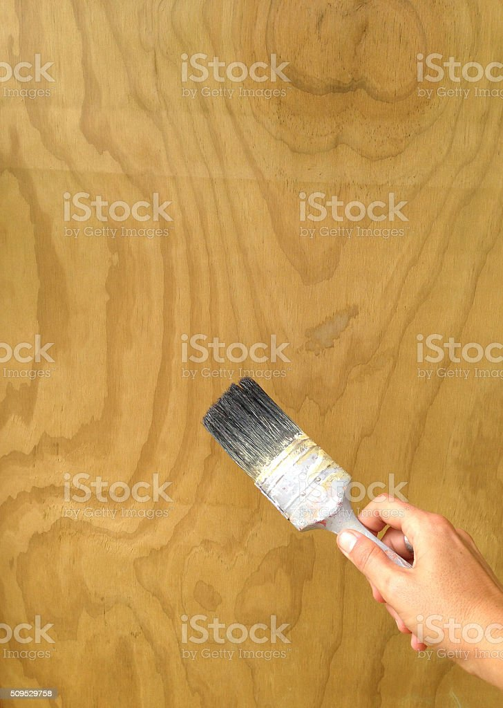 Applying woodstain to plywood with an old paint brush stock photo