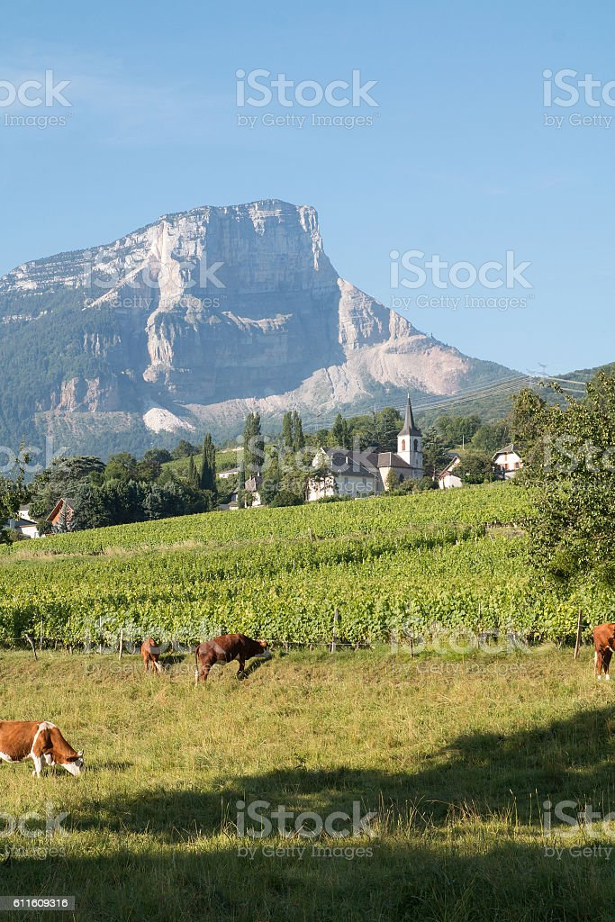 Apremont et les vignes de Savoie stock photo