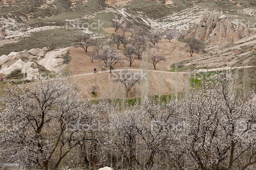 Apricot blossoms at Cappadocia, Turkey royalty-free stock photo