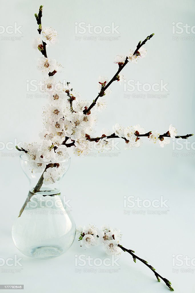 apricot in a glass vase royalty-free stock photo