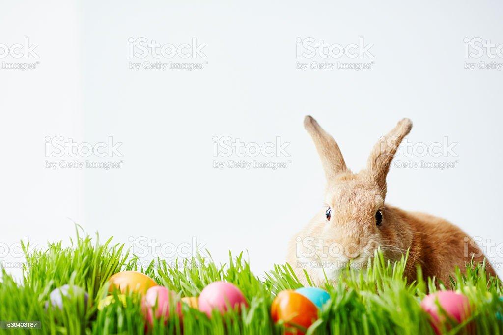 April bunny stock photo