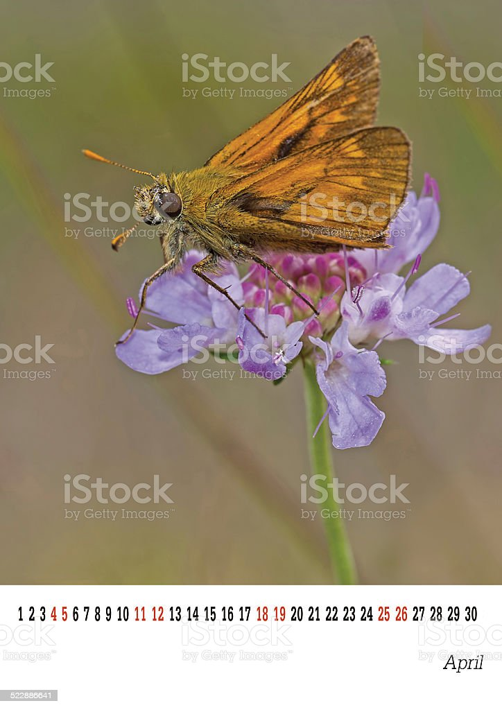 April calender 2015, Skipper butterfly, nature. Easily customised. stock photo