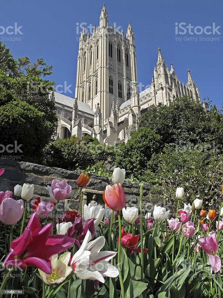 April Tulips at the Cathedral stock photo
