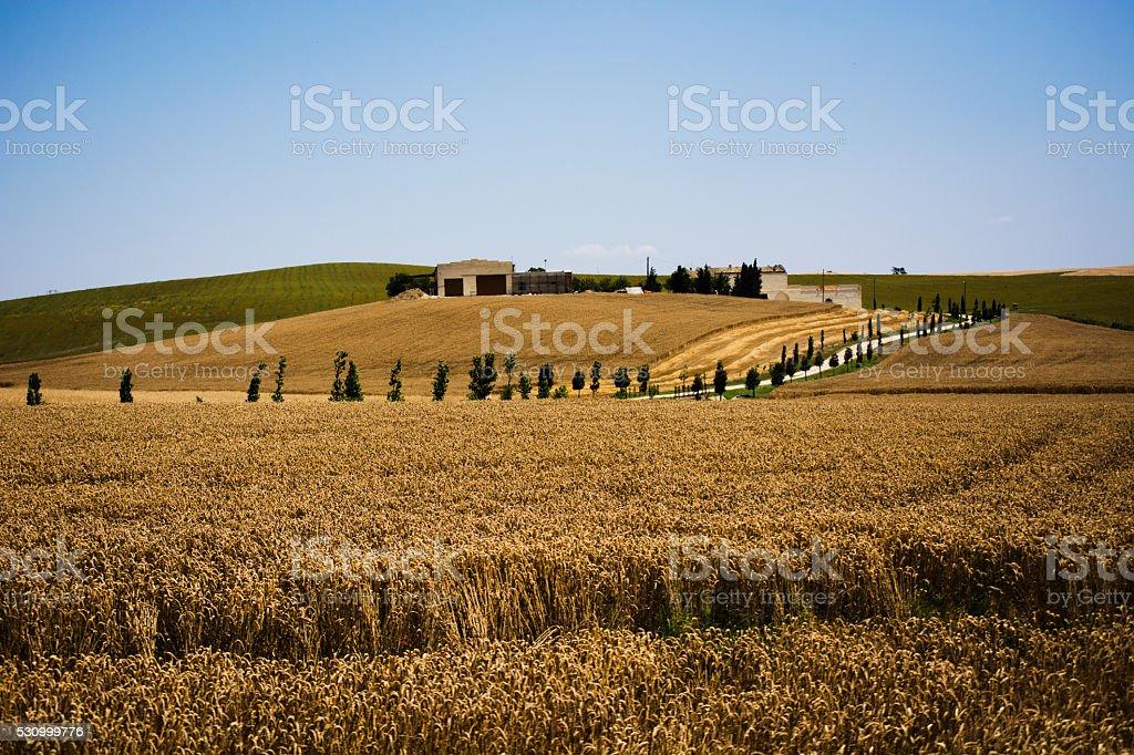 Apulian landscape stock photo