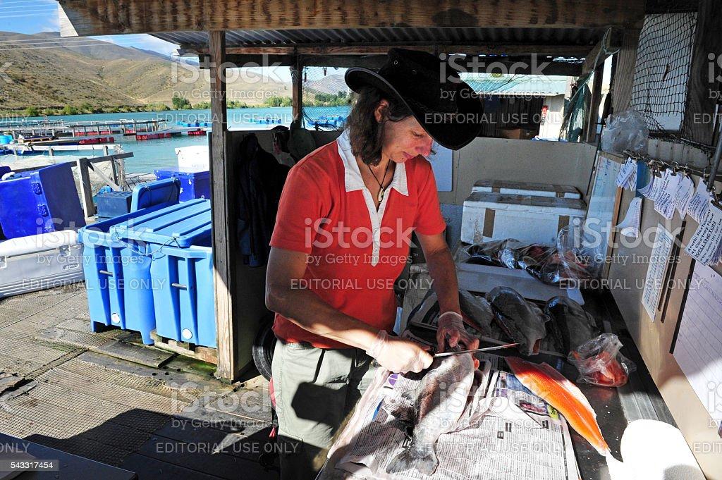 Aquaculture in New Zealand stock photo