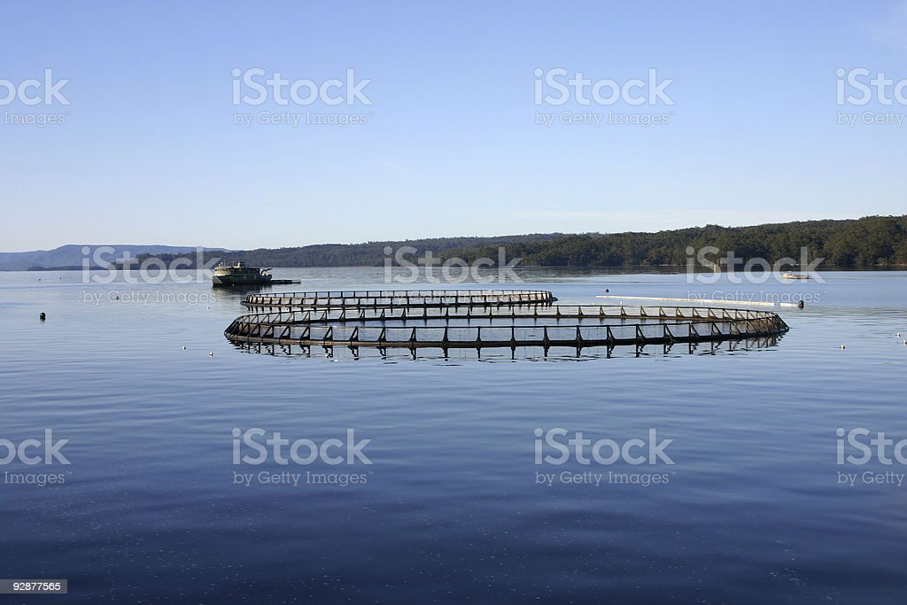 Aquaculture system on a calm and still lake stock photo