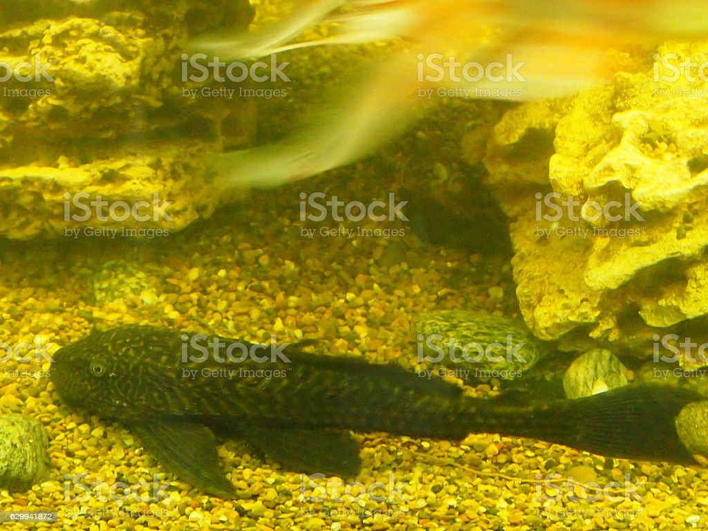 Aquarian small fishes stock photo