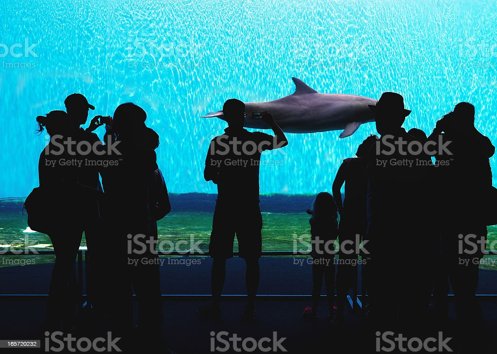 Aquarium. Color Image stock photo