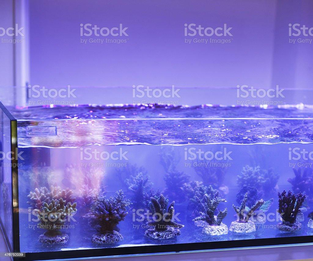 aquarium  corals seller royalty-free stock photo