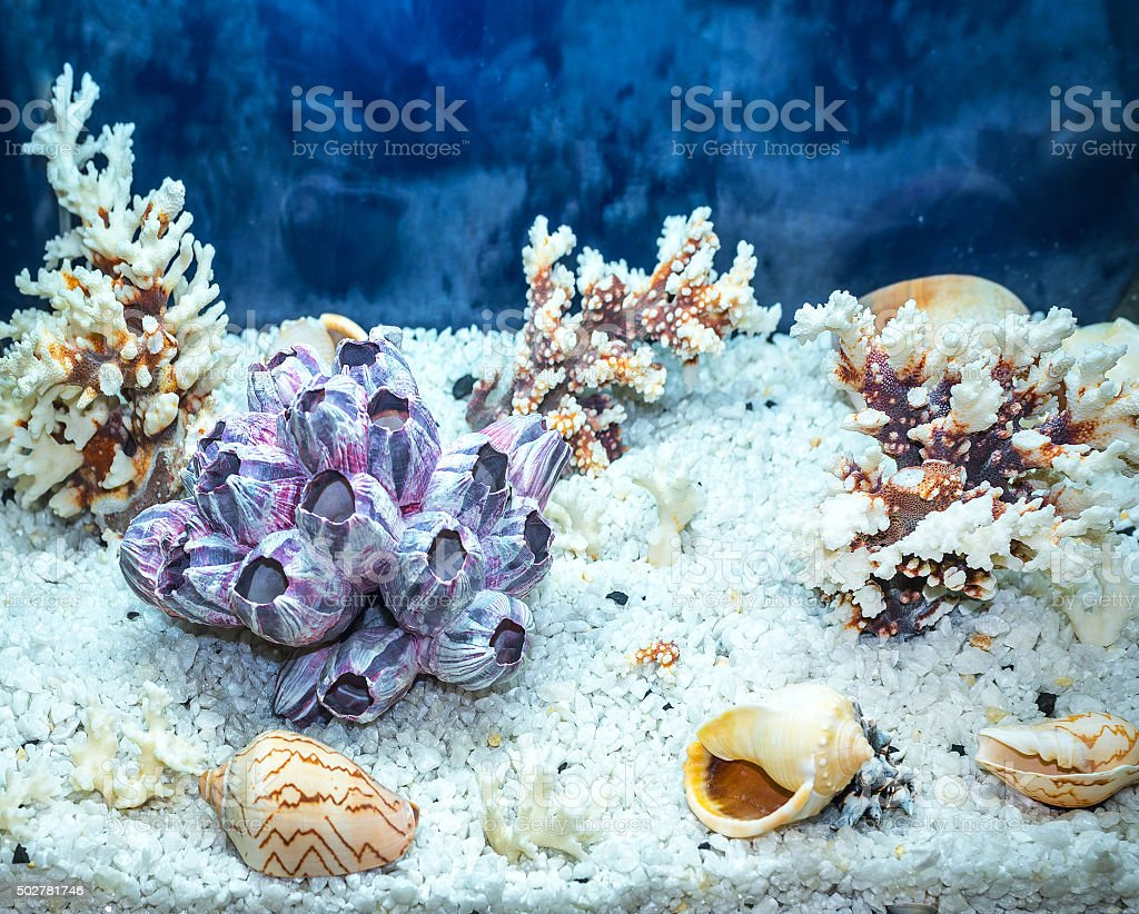aquarium decoration stock photo