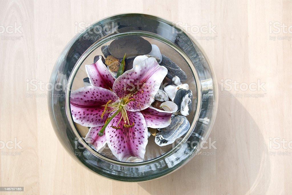 aquarium et fleur mauve royalty-free stock photo