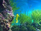 Aquarium fishes and corals