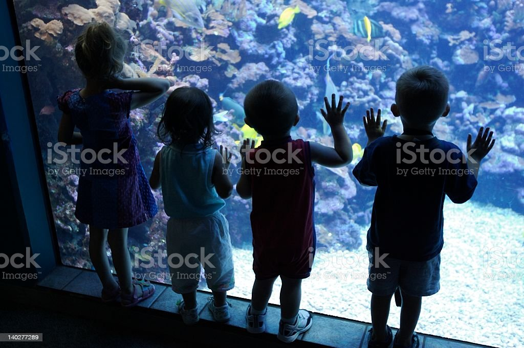 Aquarium Kids stock photo