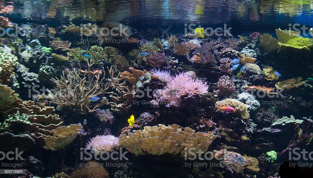 Aquarium Life stock photo