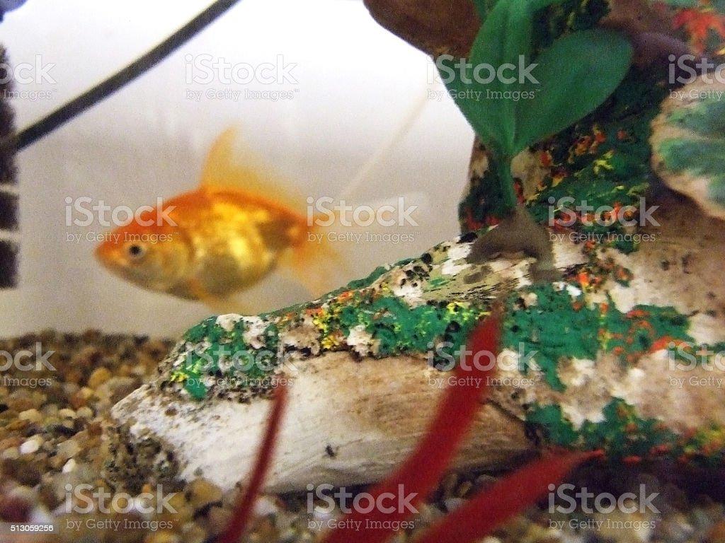Aquarium Natives stock photo