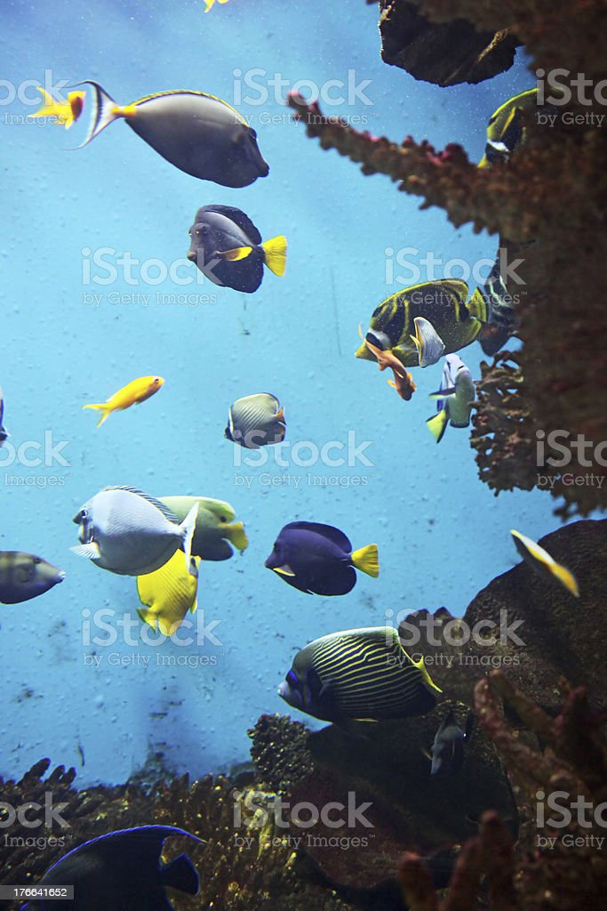 Aquarium royalty-free stock photo