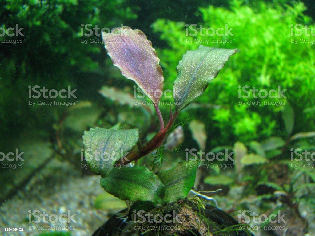 aquarium stock photo