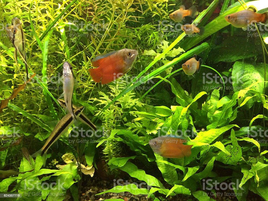 Aquarium with Peaceful Fish School stock photo