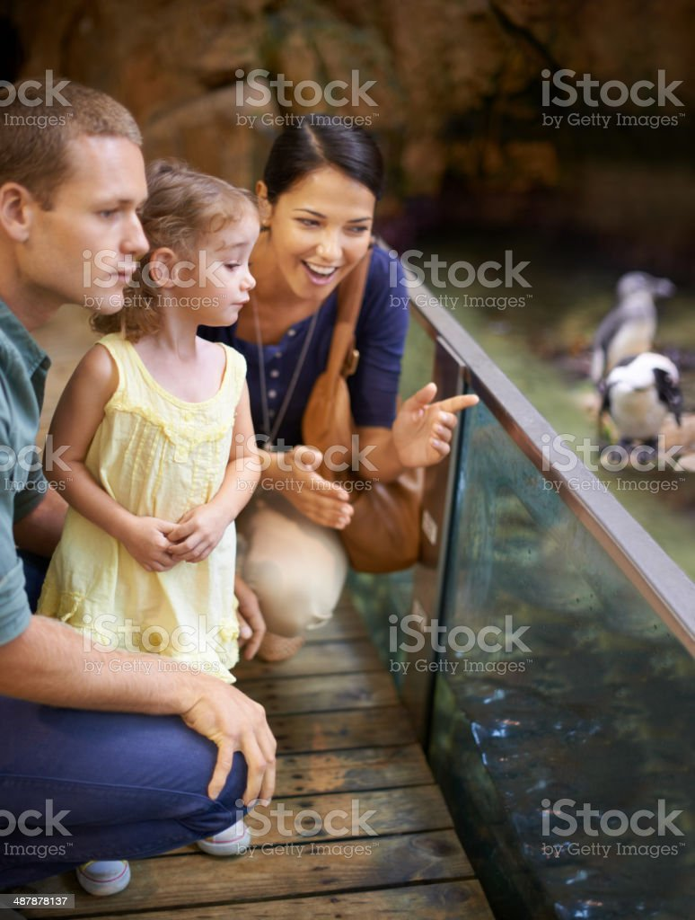 Aquariums- a paradise for kids stock photo