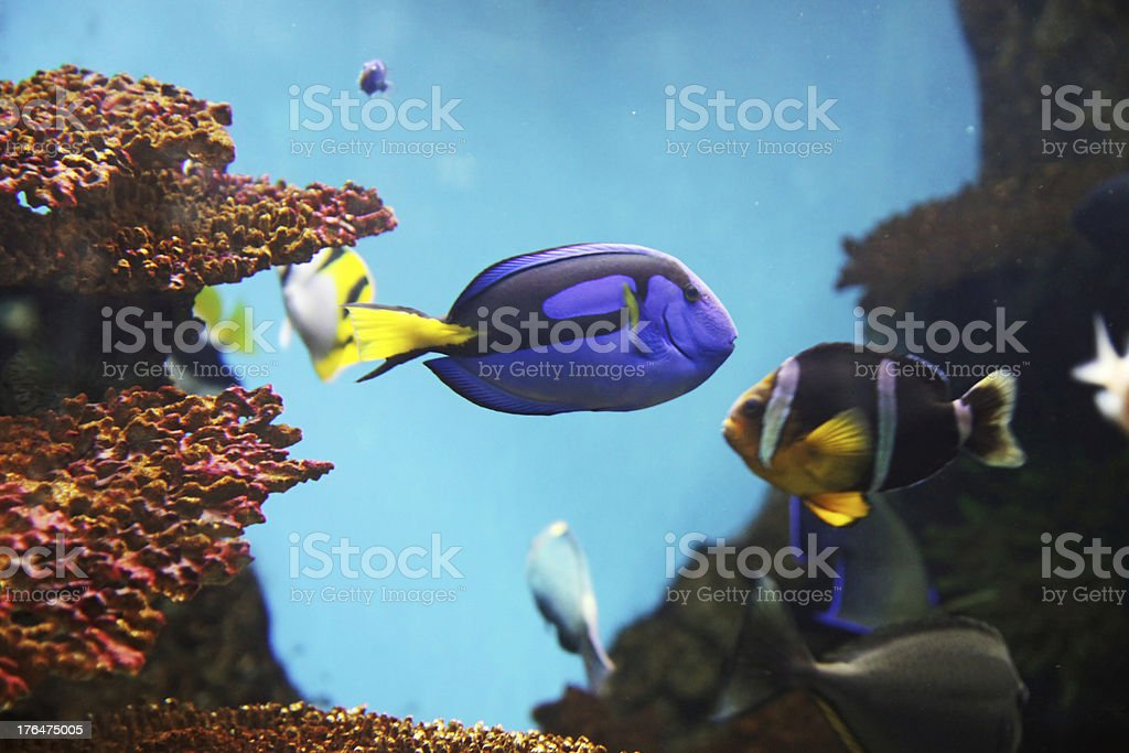 Aquarius royalty-free stock photo