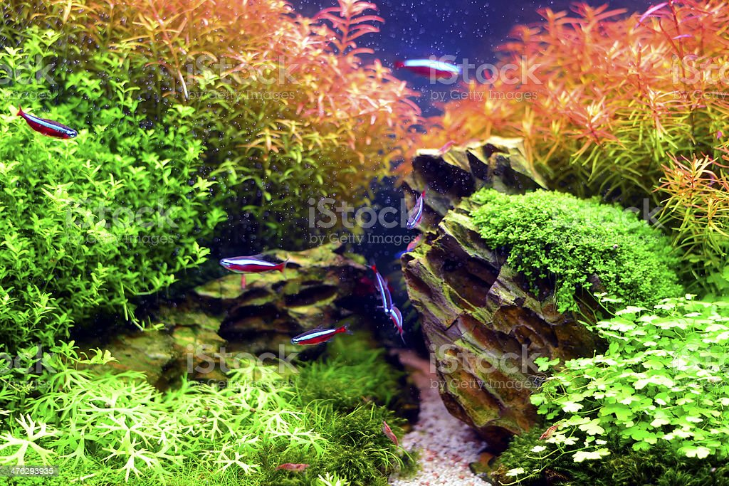 Aquascape stock photo