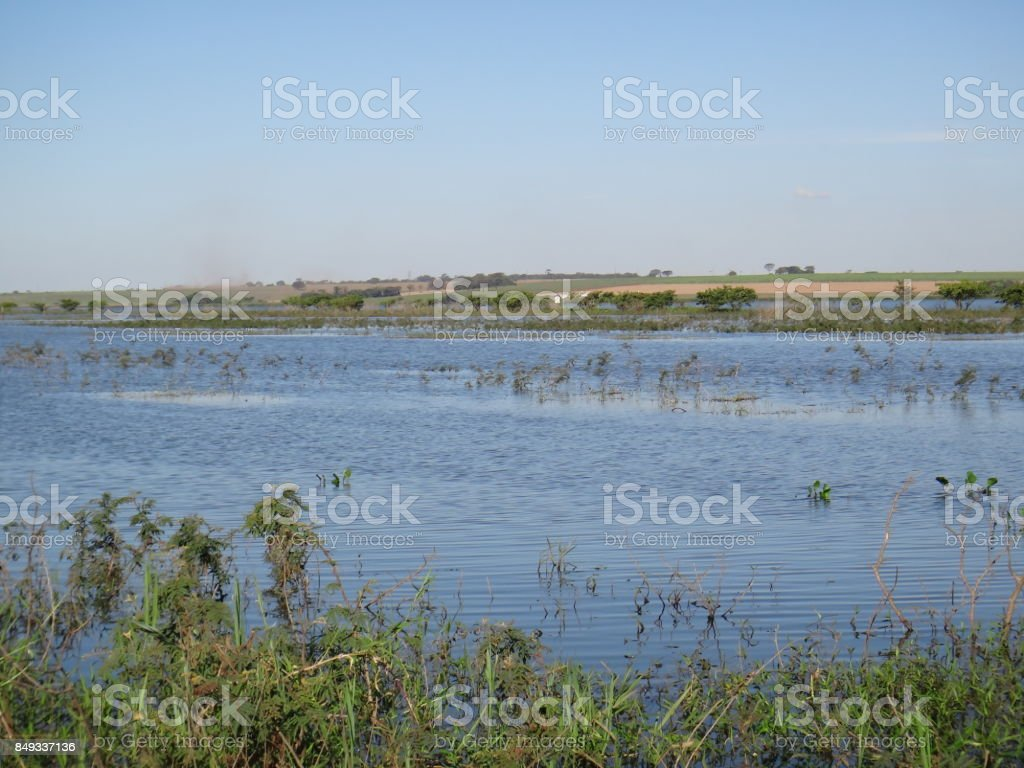 Aquatic and wetland plants stock photo