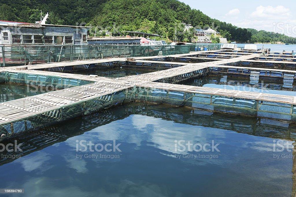 Aquatic farm royalty-free stock photo